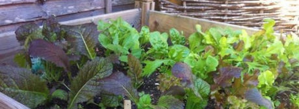 Chatham NC Gardening